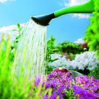 Verwöhnen Sie Ihre Pflanzen mit Premiumwasser